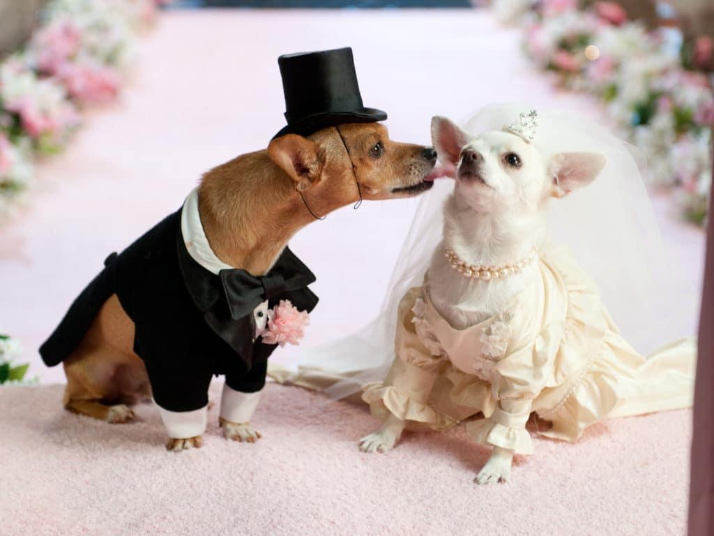 dog Engagement Announcement