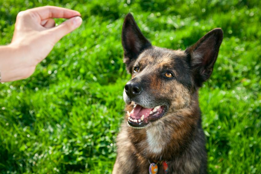Treats for dog engagement announcement