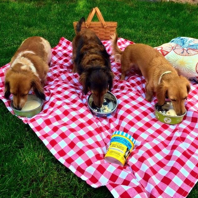 picnic engagement announcement