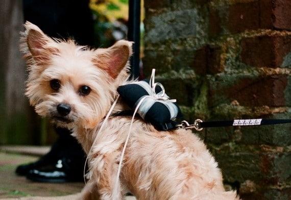 Dog Ringer Bearer