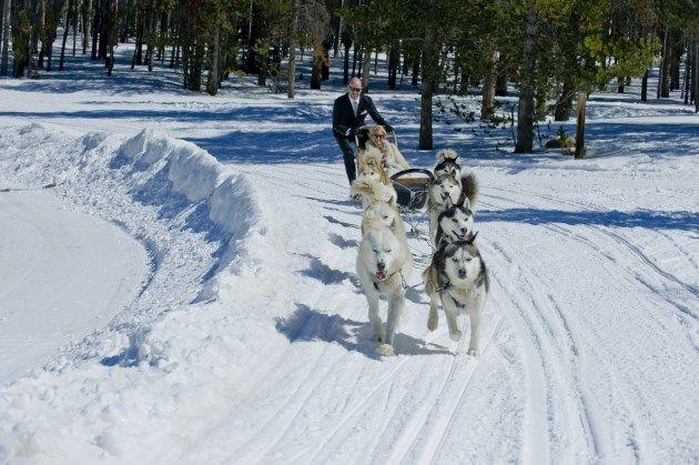 dog sled wedding getaway