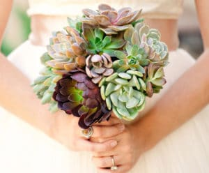 Image Source:sayidosucculents.com