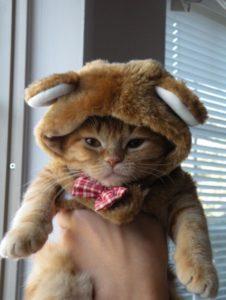 halloween pet costumes